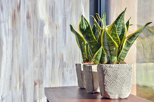 best plants for your house